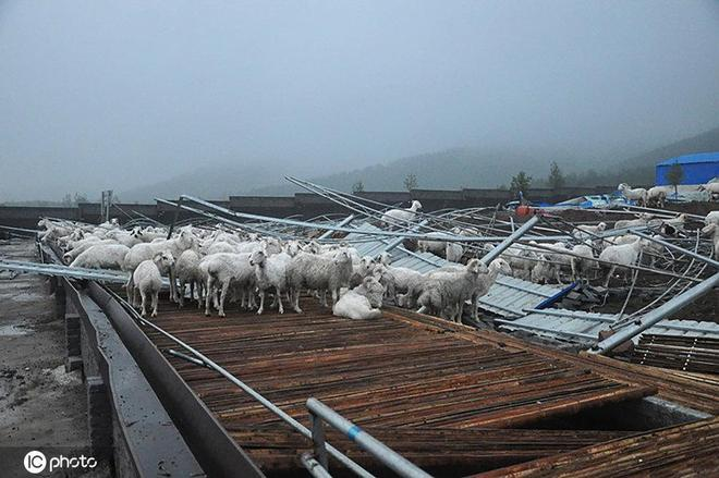 清華學霸辭掉央企高管,跑回農村放羊,如今帶千名鄉親發財