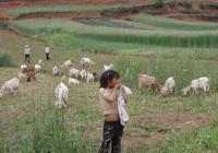 暑假生活,農村孩子的樂園!