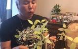 張庭晒老公林瑞陽在家裡帶孩子,還修剪花草,一等的居家好男人