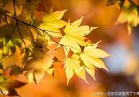 上聯:秋葉靜美秋水流;請對下聯