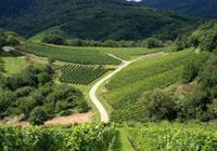 紅酒老劉|意大利知名酒莊——福羅斯酒莊/維羅納斯紅葡萄酒