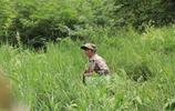 四個人學山民河邊採野生蕨菜,兩個小時採5斤,為吃法犯愁