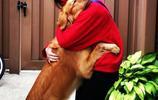 當家裡添了小寶貝的時候,寵物狗狗們是如何反應?看這些溫馨瞬間