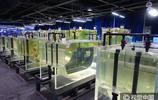 天津未來水母館五光十色 成神奇夢幻水母世界