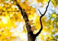 精美絕倫的好句子:人生一世,花開一季,感恩相遇,且行且珍惜