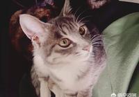 貓咪打架受傷會自愈嗎?