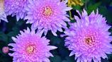 深圳仙湖植物園,這裡的花太美了,春遊賞花自拍絕佳之地