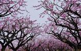 四季花園,自在孝昌,魅力新孝昌,福匯觀音湖