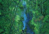精美細緻的魔幻森林插畫欣賞
