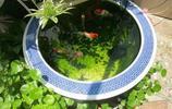 等我有錢了,我也要買這樣的魚缸,真是大開眼界