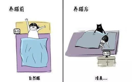 9張圖總結養貓後的真實生活,作為鏟屎官,每一條都中了!