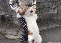 養了一隻不回家的喵!貓:我還要玩,我不要跟你回去……