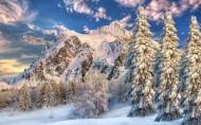 風景圖集:雲杉樹木風景