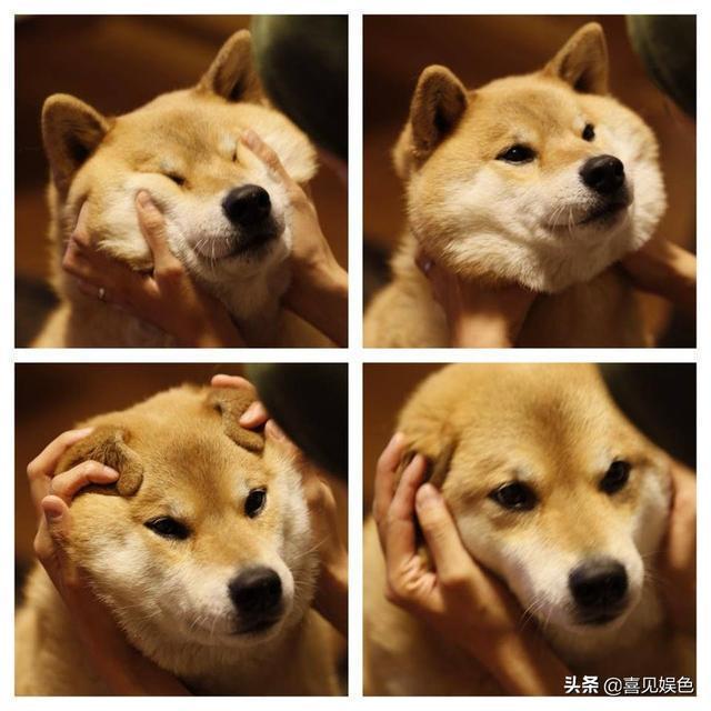 大家都在晒自家寵物十年對比照,一位網友晒出的照片卻讓人心疼