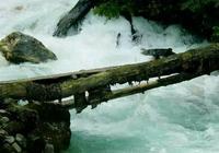 心理測試:4個獨木橋,你不敢走哪個?測你最大的弱點是什麼!