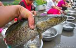 農村大集村民賣野生稀罕物,格格燕22元一斤,一條白魚沒人敢買