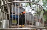 被囚禁的飛鳥