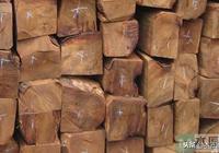 「木材百科」紅木種類知識,紅木的命名及各類紅木特徵