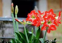 最適合換盆的季節,錯過換盆你可能今年都見不到它開花!