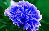 唯有牡丹真國色,花開時節動京城,洛陽牡丹花卉進行中