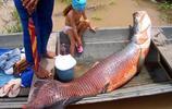 亞馬遜河10大殺手,食人魚第三,第二以食人魚為食,第一真厲害