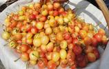 櫻桃品種裡的極品,皮薄汁多鮮甜可口,卻難在各大市場一見真身