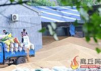 夏邑:貼心惠農糧滿倉
