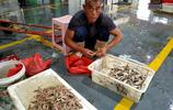 開海首船歸來 漁港碼頭成購鮮好地方 大蝦10元一隻 比管魚7塊一斤