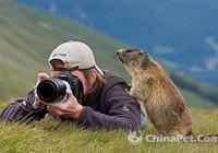 藏區雪豬子有信仰的動物,好萌啊
