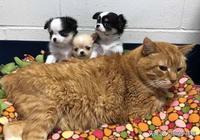 流浪貓被救,為表達感謝幫助了很多動物,如今也成為了醫院好幫手