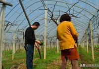 農田裡有種野菜,春天吃很鮮嫩,根系有小毒,不建議多吃