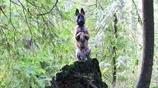真會玩!10張圖證明狗狗的搞笑天賦真不差,看完讓你笑不停