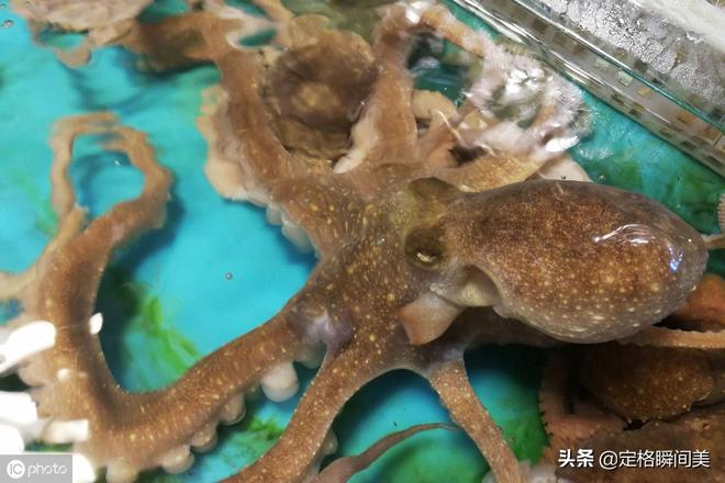 休漁期青島海鮮價格穩中有降 斑馬蝦120元一斤明碼標價買得放心
