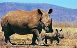 動物圖集:犀牛美圖