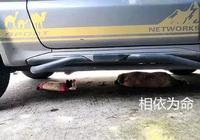 流浪狗翻垃圾桶,叼出一個玩具布偶,隨後的行為引起路人注意
