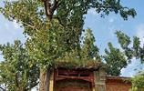 村裡一座老廟歷400多年風雨曾為學校如今卻閒置荒廢無人修
