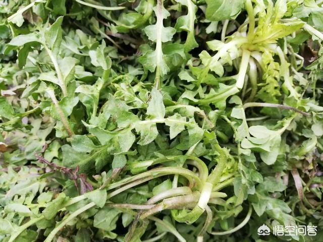 在農村你所有吃過的野菜中,哪種野菜口感是最好的?