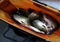 釣魚酒米花錢買,不如在家自己做,製作教程送給你,簡單易學