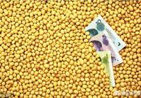大豆近期行情走跌,12月份大豆的行情如何?