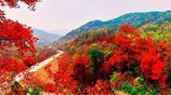 每年的金秋季節,這裡紅葉滿山,如同落霞,非常壯觀