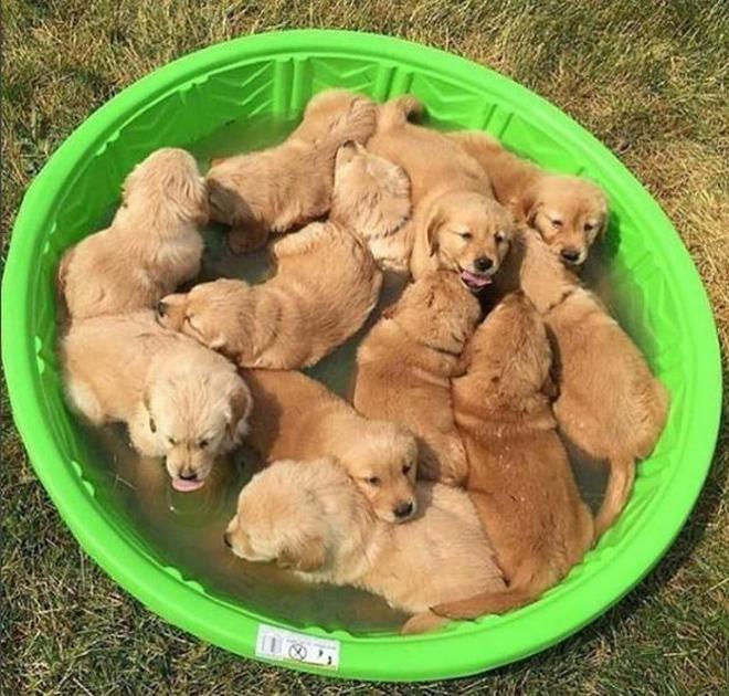 一隻狗是狗,一群狗就是游擊隊了