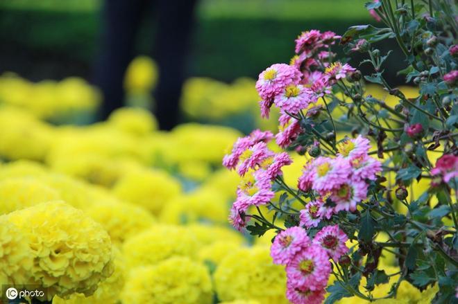 用心去感受植物 他會給你一個不一樣的世界。