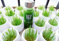 螞蟻農場大麥若葉青汁是什麼?