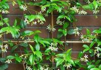 這5種花,種一棵在露臺、院子裡,遇土即活,耐寒好養,漂亮芳香