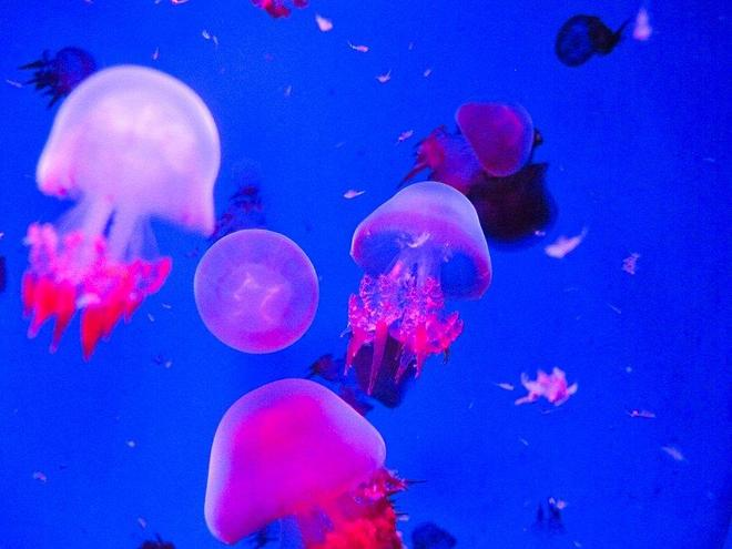 孩子們的夢幻天堂《金鷹海洋世界》