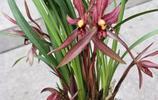 三月份養蘭花你應該知道的一些細節