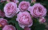 這個冬天,這些盆栽火了!到了三九天花開紅豔豔,清香惹人醉