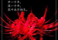 詩歌:《彼岸花》