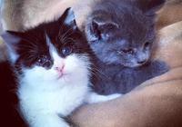 2只小貓沒了貓媽媽,為了生存而向女子討食,吃飽後還跟著女子走