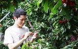 別人家的社會實踐!山大學生網上幫果農賣櫻桃,還掙了40萬!